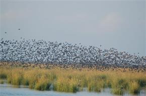 Report reveals disturbing national trend of increased coastal wetland losses