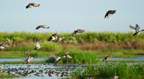 Duck Hunting —Bigger & Better in Texas