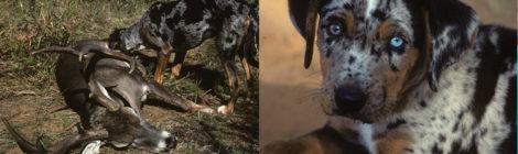 A Blood-Trailing Dog