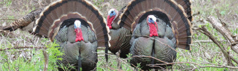 EARLY SEASON GOBBLER CHALLENGES