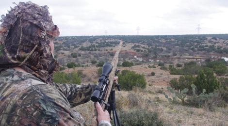 West Texas Coyote Challenge