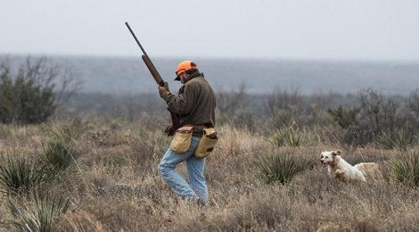 QuailGuard: For the good of quail