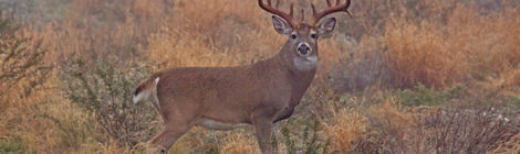 2019 Texas' Statewide Hunting Forecast