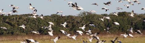 Shooting Late Season Ducks & Geese