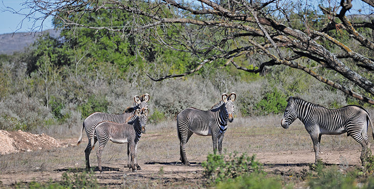 Texas' Hunting Safari