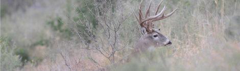 Early Deer Season Refresher