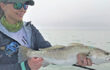 Cold Water Trout Tactics & Options