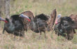 Gearing Up for the Spring Gobble