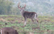2021 Texas' Statewide Hunting Forecast