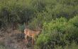 Deer Hunting Prep